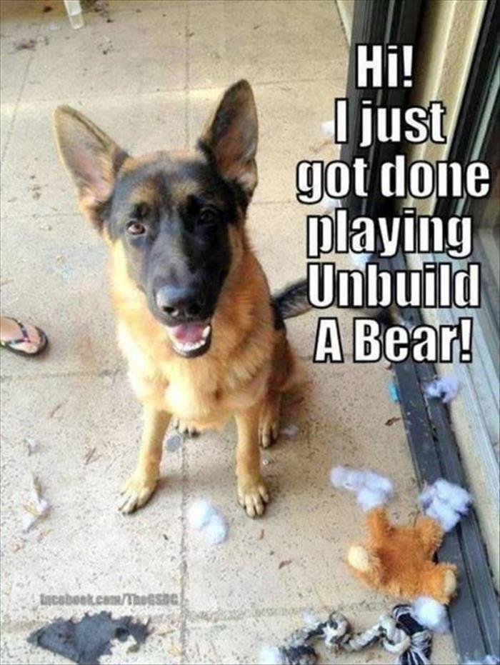 a funny animals (22)
