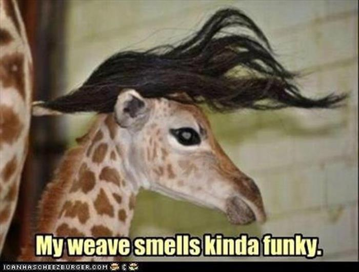 a funny animals (23)