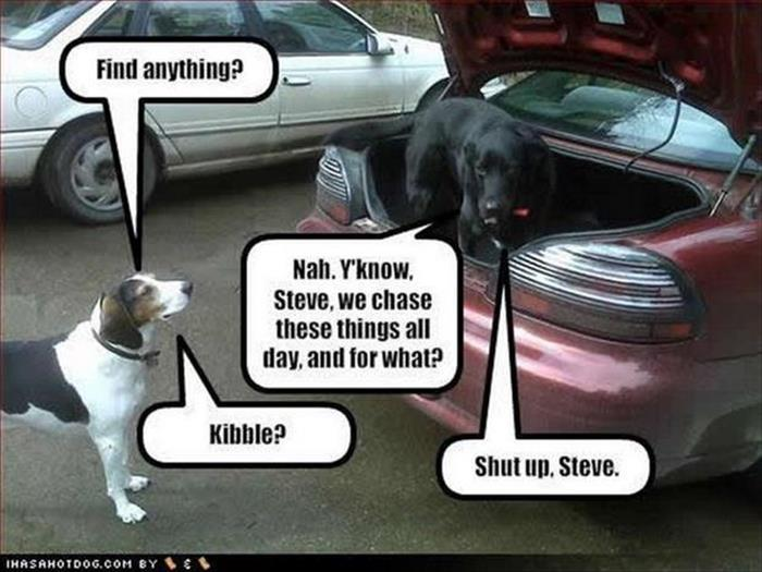 a funny animals (5)