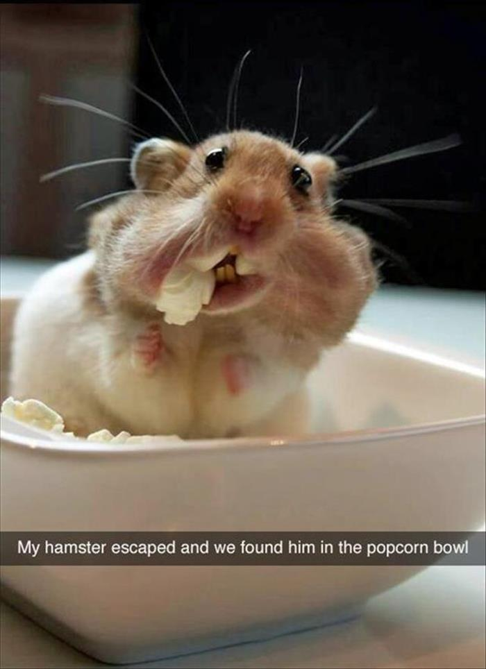 a funny animals (9)