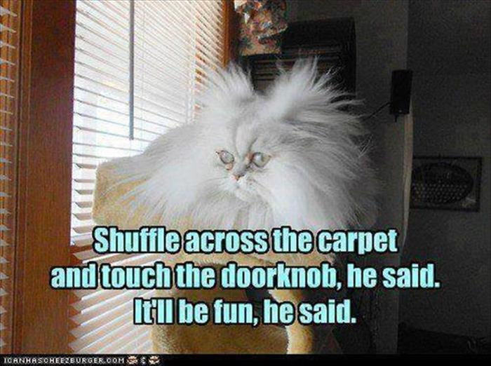 fun animal pictures (12)