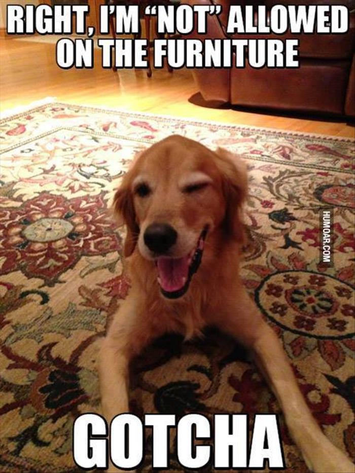 fun animal pictures (18)