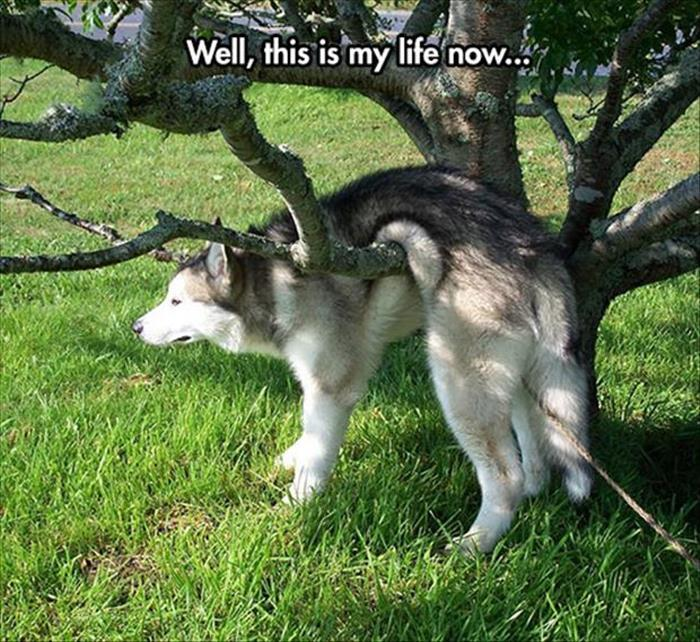 fun animal pictures (5)