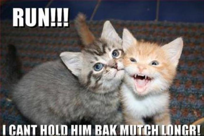 fun animal pictures (9)