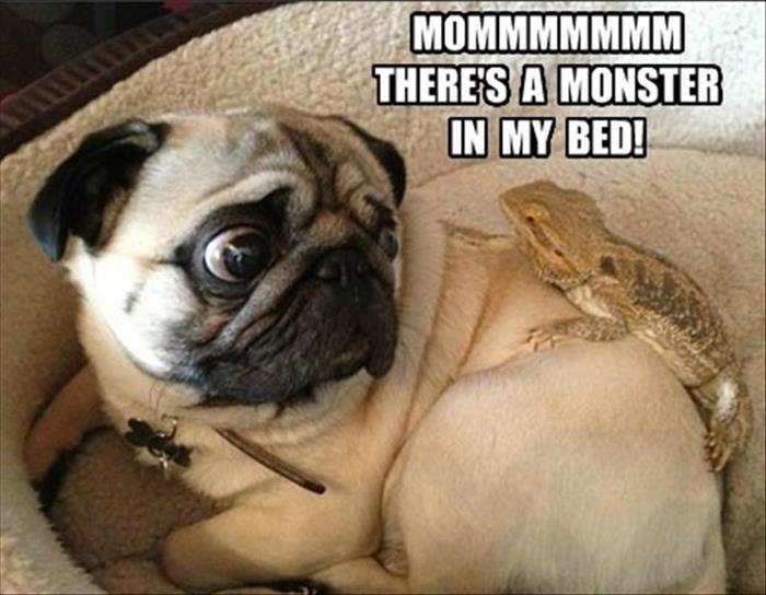 funny animal pictures (6)