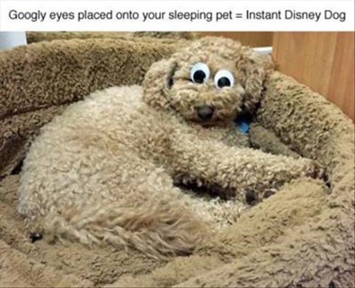 funny animals pictures (1)