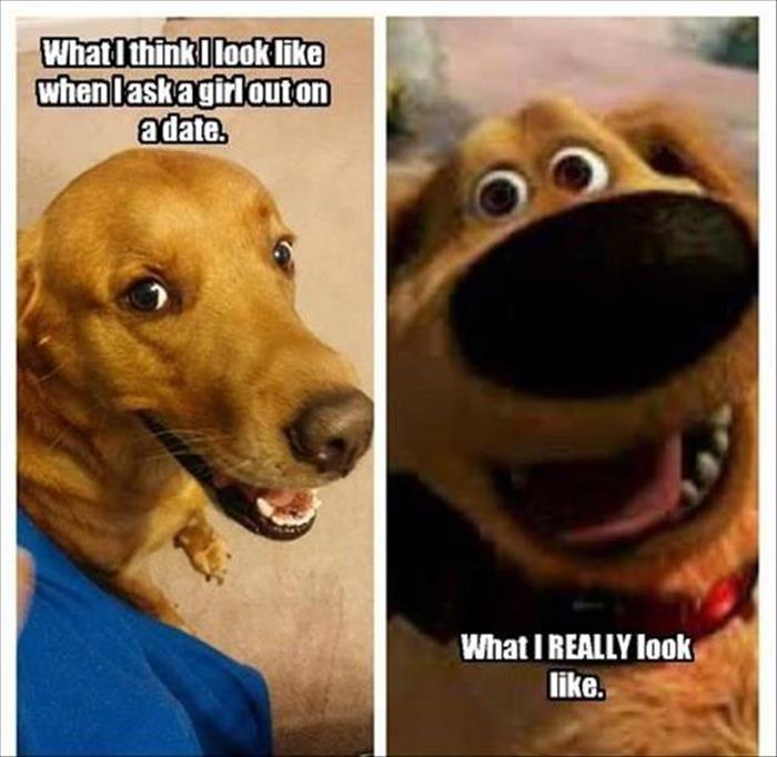 funny animals pictures (10)