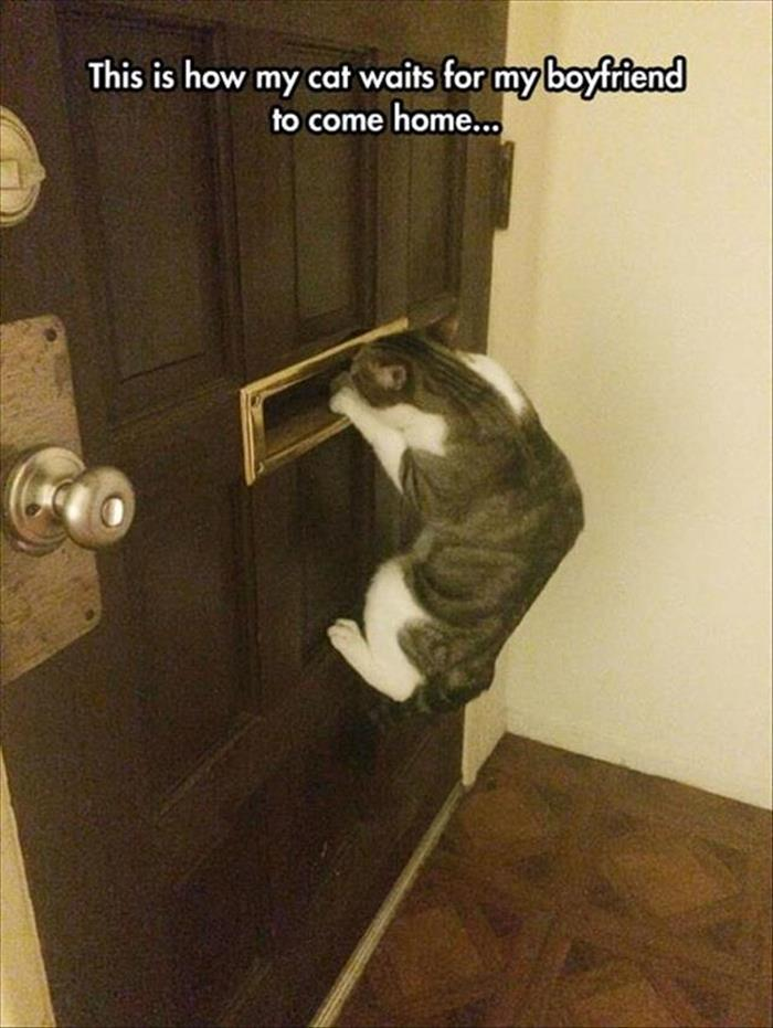 funny animals pictures (11)