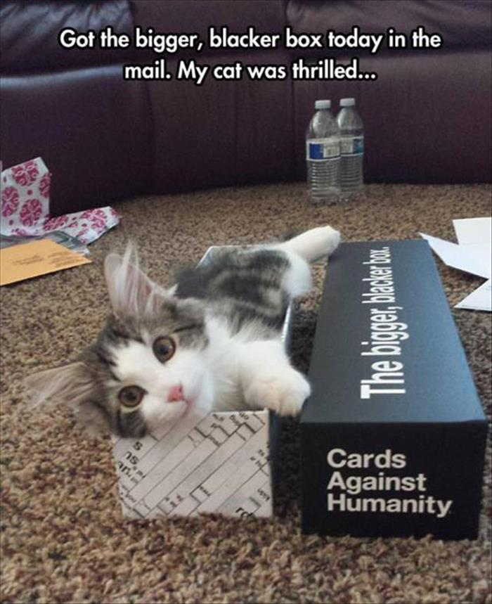 funny animals pictures (14)