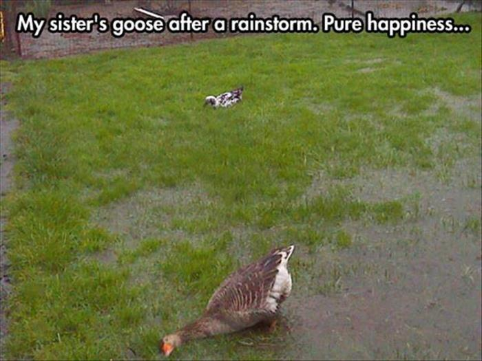 funny animals pictures (19)