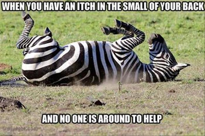 funny animals pictures (21)