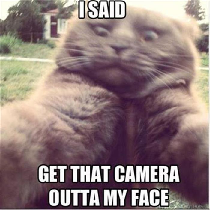 funny animals pictures (23)