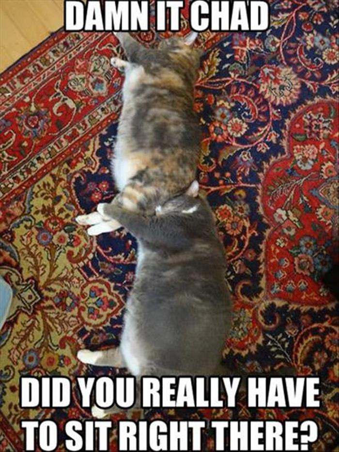 funny animals pictures (26)