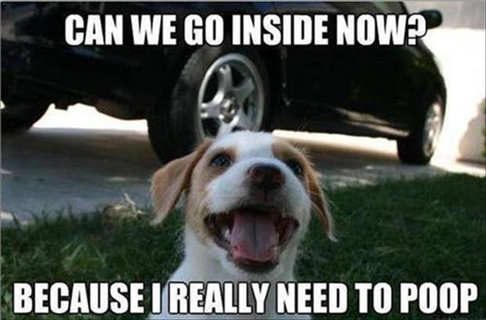 funny animals pictures (29)