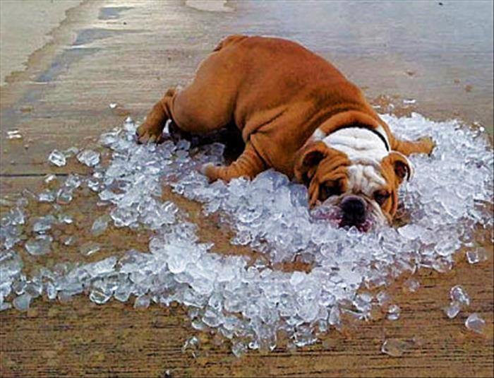 hot weather funny - photo #1