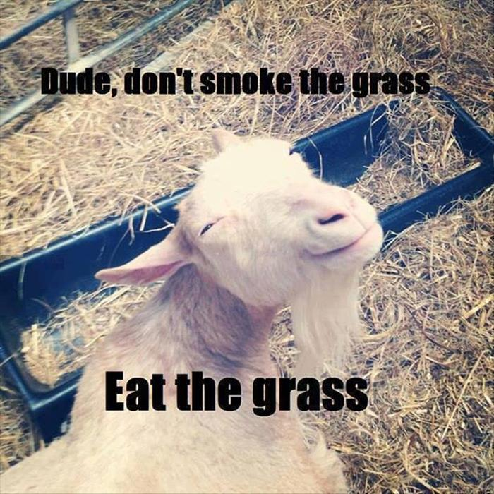 youshould not smoke the grass