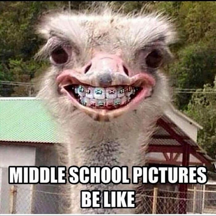 Funny Meme Quotes About School : Funny animal pictures of the day pics