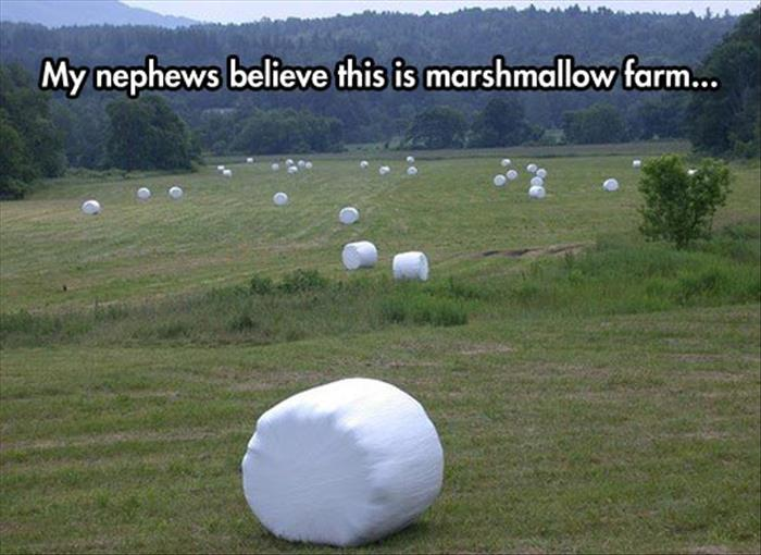 marshmellow farm