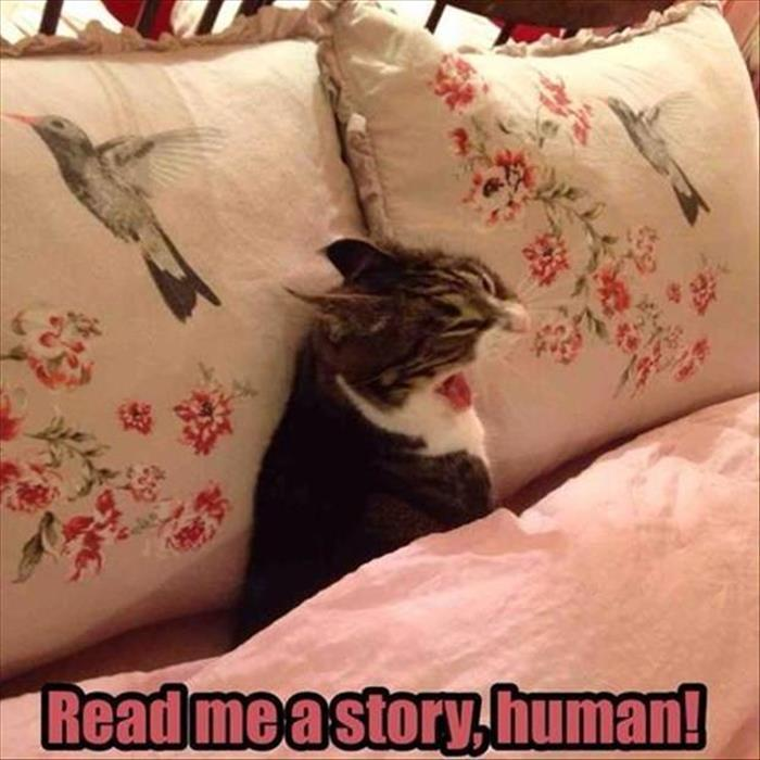 the funny animals (11)