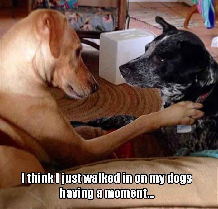 dogs having a moment