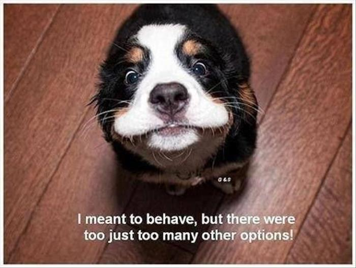 Funny Animal Wednesday Quotes