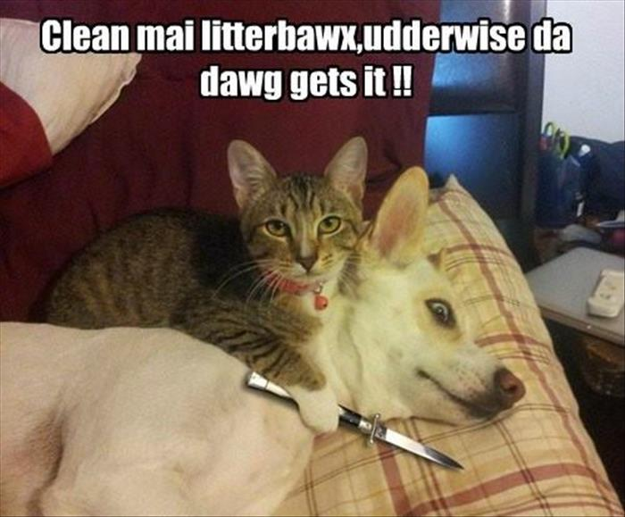 Funny Memes Clean Animals : Funny animals dump a day