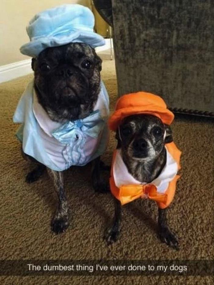 the dumb and dumber dogs