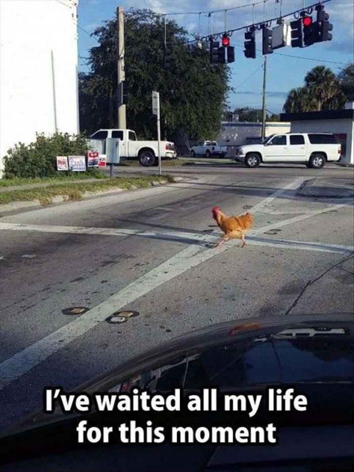 the funny chicken