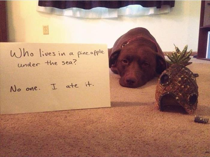 Shameful Dogs Are Hilarious When They Aren T Yours 16 Pics