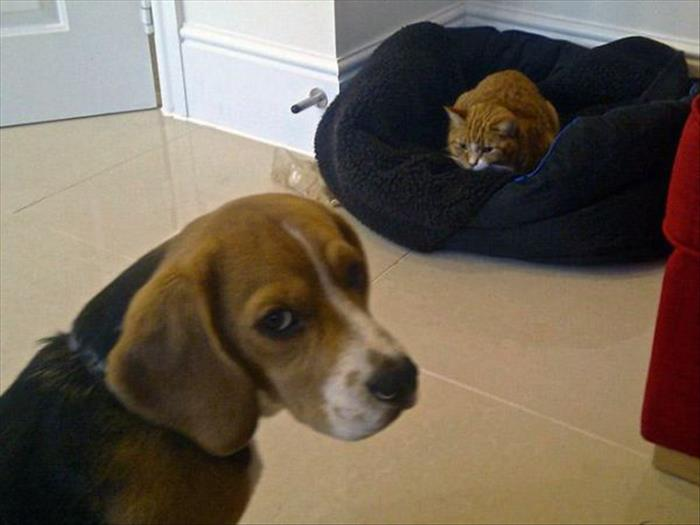 cats and dog beds (1)