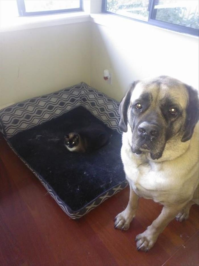 cats and dog beds (10)