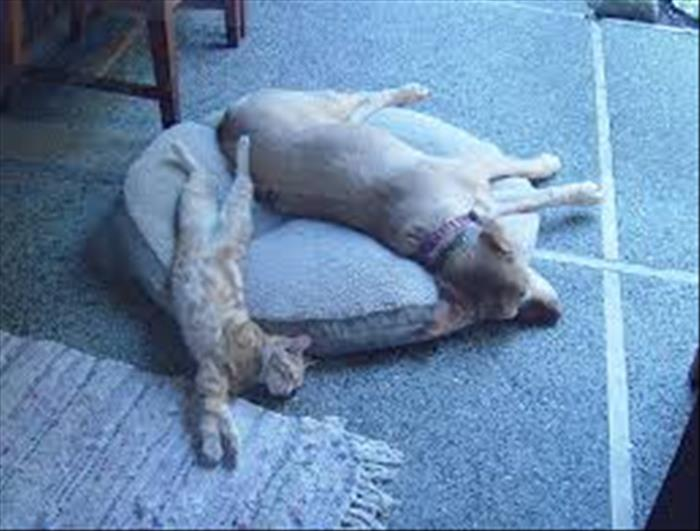 cats and dog beds (11)
