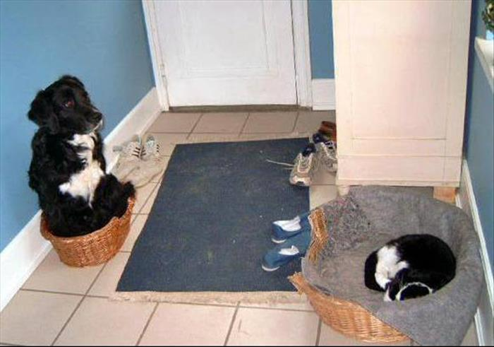 cats and dog beds (13)