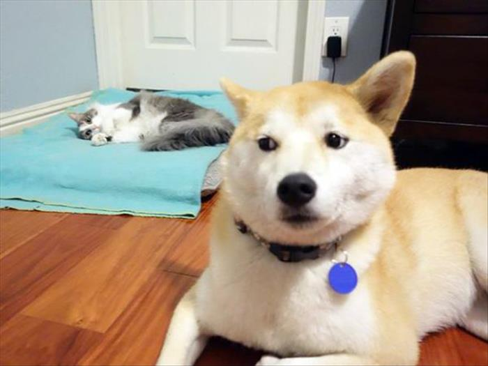 cats and dog beds (14)