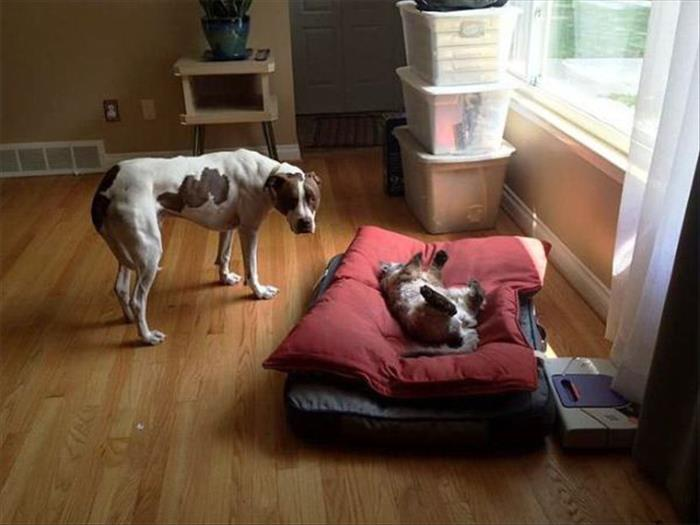 cats and dog beds (15)