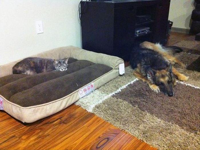 cats and dog beds (16)