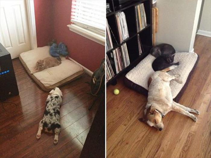 cats and dog beds (17)