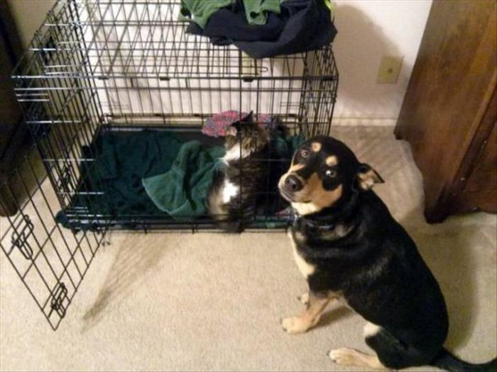 cats and dog beds (18)