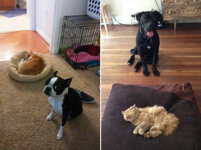 cats and dog beds (4)