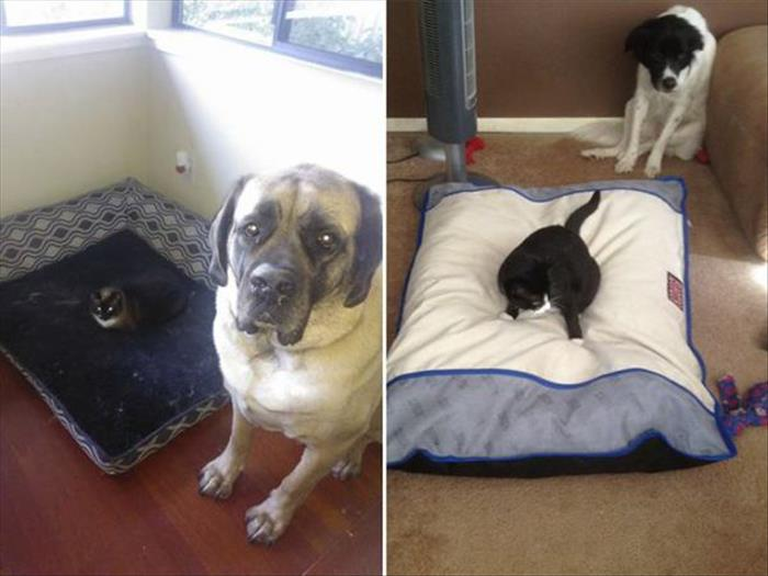 cats and dog beds (6)