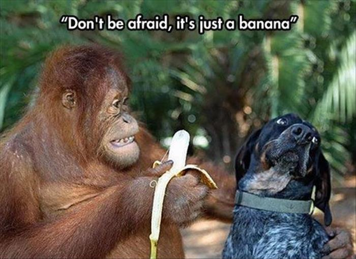 the funny animals (22)