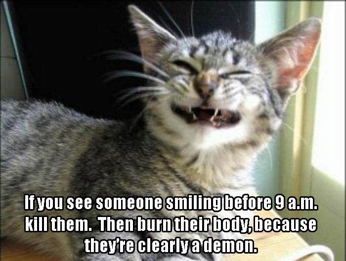 cat smiling in the morning