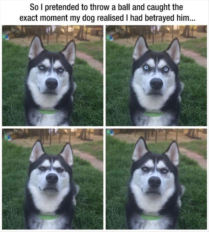 funny animal pictures (5)