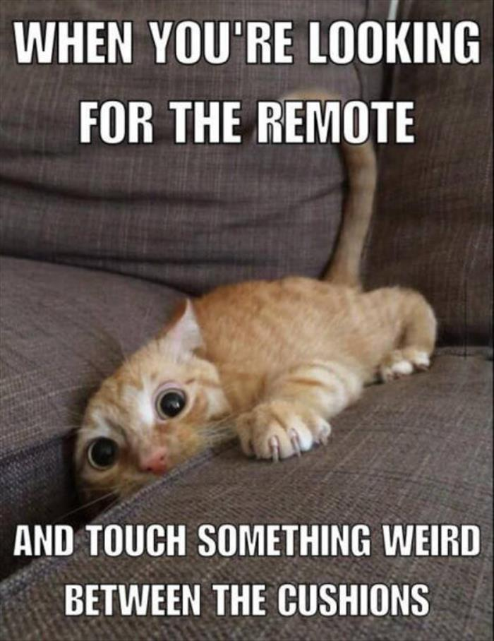 funny looking for the remote