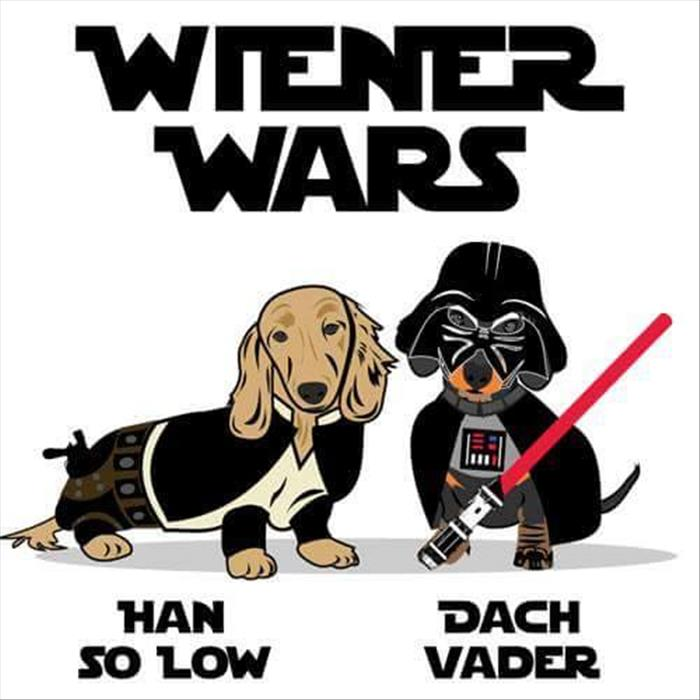 funny weiner dogs