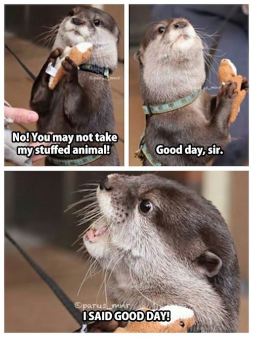 good-day-otter