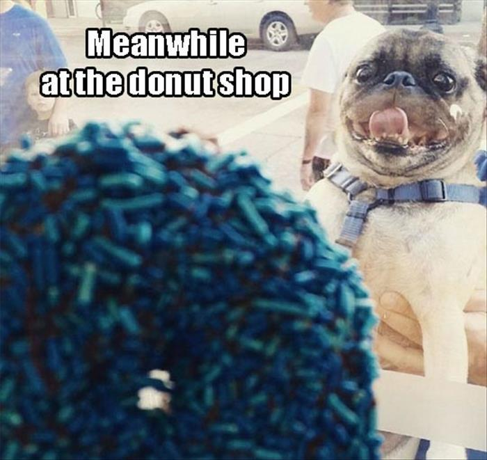 the funny pictures (13)