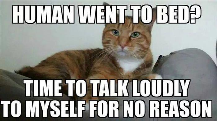 Funny Cat Memes: Funny Animal Pictures Of The Day
