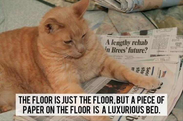 What The Cat Lady S Cats Are Really Thinking 21 Pics