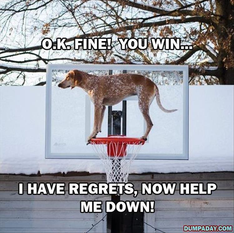 Funny Dog Video When You Regret It